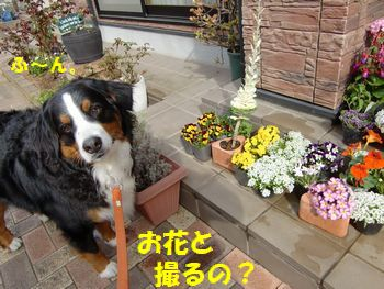 お花とまた撮んの~??