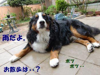 雨降ってきちゃったよ・・桜平気??