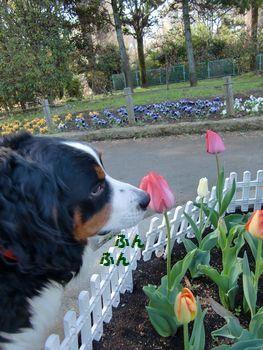 新しい春だねっ!