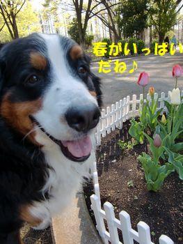 春が山盛り~!!