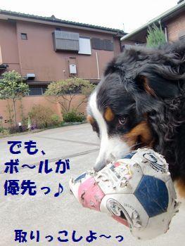 ボールが大事なんだも~ん。