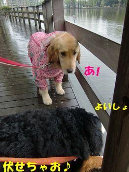 雨が降ってもじっくり沼見るの♪