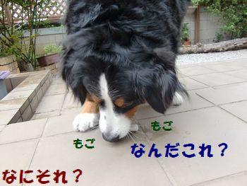 なんじゃ~これ??