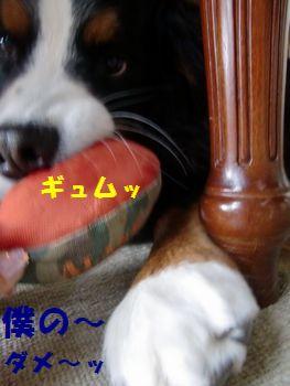 だってこれ僕のボールだもん!!