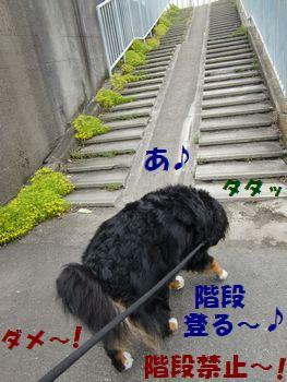 ここ登る~!階段好き~!
