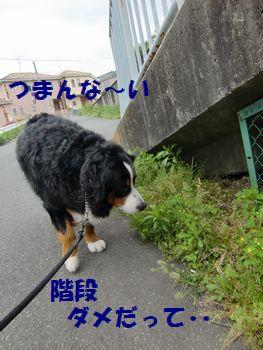 階段禁止なの~!?