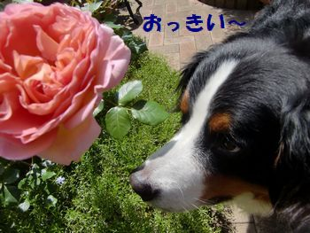 おっきいお花だね~。