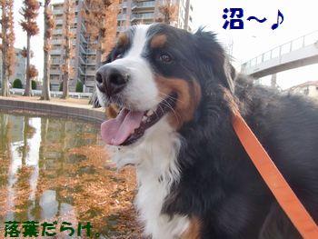 2011年だって沼~!