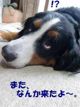 またなんか来た!!