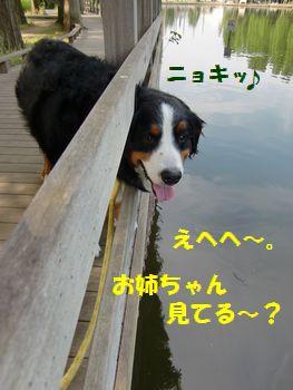 おねえちゃん見てる~!?