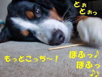 もっとこっちこ~い!!