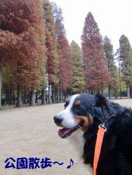 ココ公園~♪