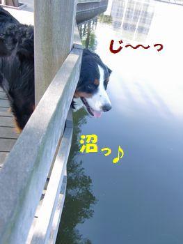 沼見る~!!