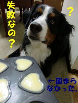 プリン食べたかったなぁ~。