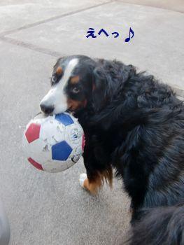 ボール遊びは得意だよ~♪