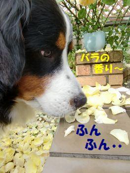 バラの香り~♪