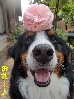 僕とお花~♪