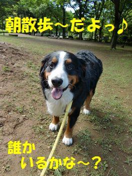 朝散歩~♪