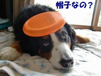 お帽子じゃないよね~。