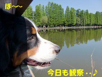 沼!いい天気~。