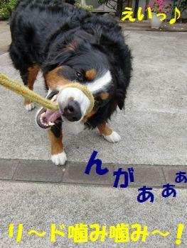 得意技~!!