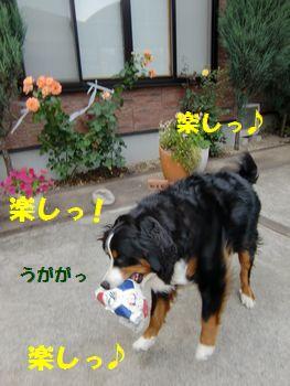 ボールの出番~!!
