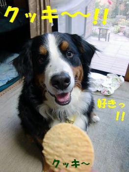 クッキー来た~~!!