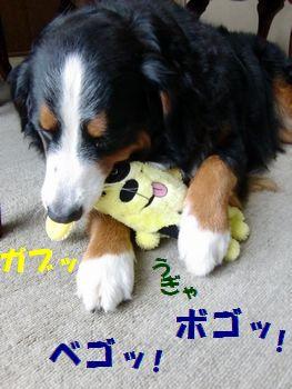 かじったる~!!
