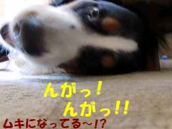 ほら!食べてるの~!!