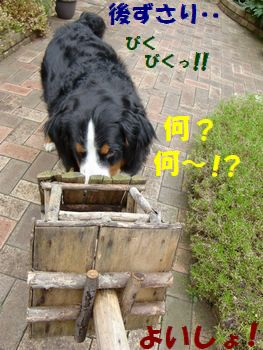 なんか動いた~!?