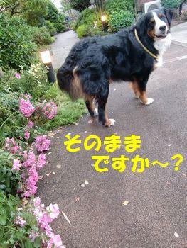 い~の~!?