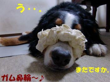 お鼻が~!僕のお鼻が~!!