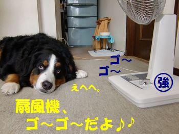 扇風機の風強~♪