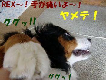 お耳はい~の!!