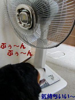 風っていいね~♪