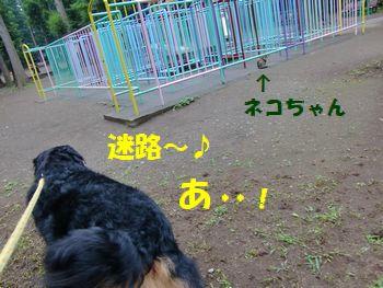 迷路で遊ぼ~!