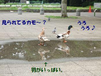歩くの楽しいの~!?
