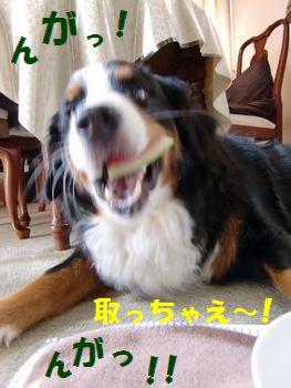 思いっきり噛んじゃえ~!!