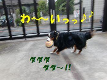 走っちゃうよ~!