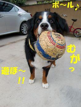 ボールで遊ぼうよ~!