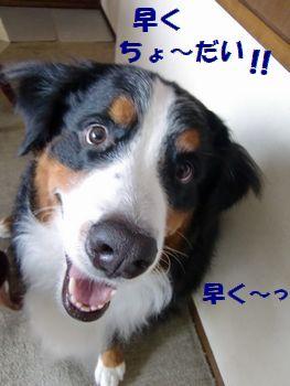 は~や~く~!!