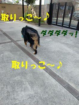 ボールこっちだよ~!