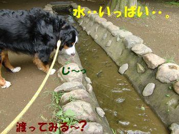 お水がたくさん・・・・