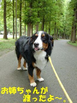 お散歩続き~♪