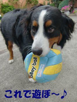 このボールで遊ぼうね~!