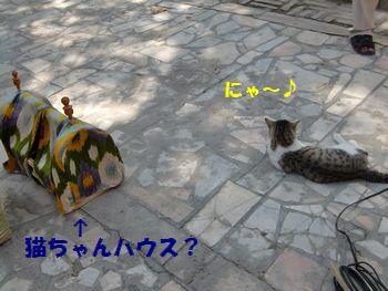 猫ちゃんハウス。