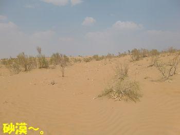 砂だらけ~。