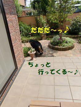 お庭パトロール~♪