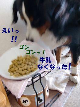 牛乳な~い!!