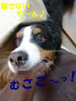 は~な~さな~い!!